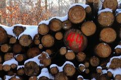 Nummer 44 i rött i skogen Royaltyfria Foton