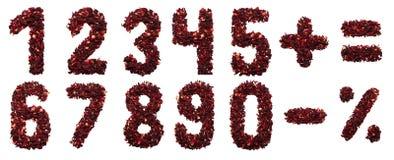 Nummer och symbol av torkade hibiskusteblommor på en vit bakgrund Royaltyfri Fotografi