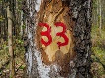 Nummer 33 op de inkeping op de berk Stock Afbeelding