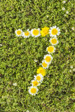 Nummer sju från blommanummer Arkivbilder
