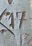 Nummer 17 som inristas i ett träd Arkivbild