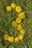 Nummer tre planlade med maskrosen på gräsmattan Arkivfoton