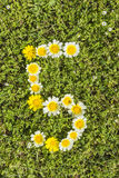 Nummer vijf van bloemaantallen Stock Afbeeldingen