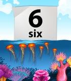 Nummer zes zes kwallen onderwater Royalty-vrije Stock Afbeeldingen