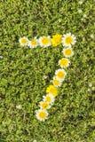 Nummer zeven van bloemaantallen Stock Afbeeldingen