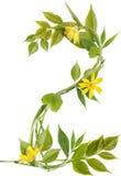 Nummer zwei von den Zweigen mit Blättern und Blumen Lizenzfreie Stockfotografie