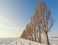 numrera trees arkivfoton