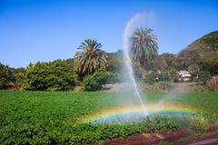 numret för bakgrundsfältblomning planterar vita potatispotatisar Royaltyfri Bild