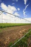 numret för bakgrundsfältblomning planterar vita potatispotatisar Royaltyfria Foton