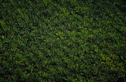 Nunca terminando plantações tropicais imagens de stock