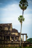 Nunnor mediterar på fördärva av Angkor Wat på soluppgången Arkivbilder