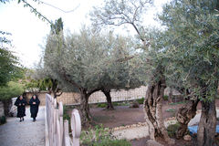 Nuns in the Garden of Gethsemane Stock Photo