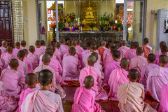 Nuns in pink robes chanting in front of Buddha Image Royalty Free Stock Photo