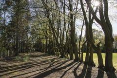 Nunsmere Cheshire Fotos de Stock Royalty Free