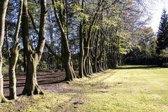 Nunsmere Cheshire Fotografia de Stock