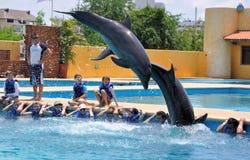 Nuotando con i delfini Fotografia Stock