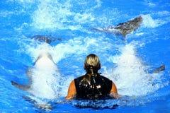 Nuotando con i delfini Immagine Stock