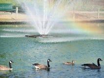 Nuotando con l'arcobaleno Fotografia Stock Libera da Diritti