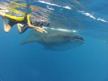 Nuotando con Whalesharks! Fotografia Stock Libera da Diritti