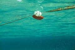 Nuotando verso la corda con la boa del Mar Rosso, banco di piccolo pesce sopra immagine stock libera da diritti