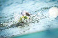 nuotata fotografia stock