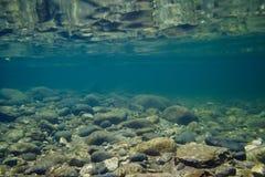 Nuotata del fiume fotografie stock libere da diritti