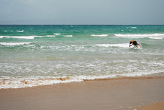 Nuotata della spiaggia Fotografia Stock Libera da Diritti