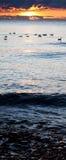 Nuotata di mattina Immagine Stock Libera da Diritti