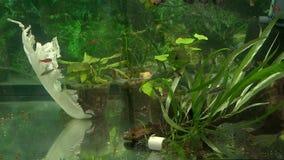 Nuotata differente del pesce nell'acquario video d archivio
