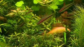 Nuotata differente del pesce nell'acquario stock footage