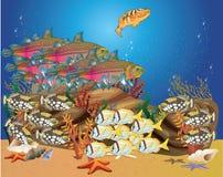Nuotata tropicale dei pesci intorno ai banchi della scogliera Immagine Stock Libera da Diritti