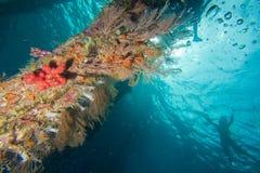 Nuotatori al pilastro Fotografia Stock Libera da Diritti