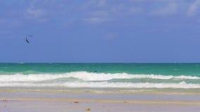 Nuotatori della spiaggia di Miami di giorno di estate e cavaliere del sud 4k S.U.A. dell'aquilone stock footage