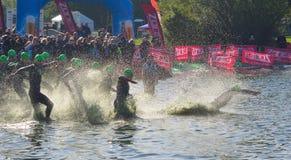 Nuotatori di triathlon che entrano nella fase di nuotata dell'open water Fotografia Stock