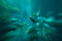 Nuoto dei pesci nel serbatoio Fotografie Stock