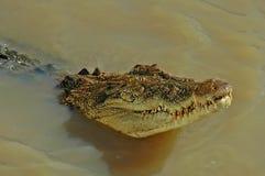 Nuoto del coccodrillo in Adelaide River Fotografia Stock Libera da Diritti