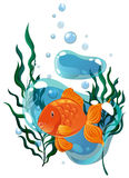 Nuoto del pesce rosso sotto l'acqua Immagini Stock