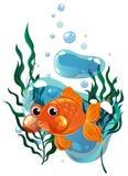 Nuoto del pesce rosso sotto l'acqua Fotografia Stock Libera da Diritti