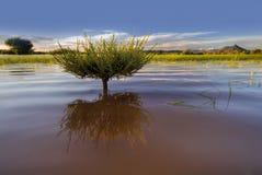 Nuoto dell'albero Fotografie Stock