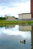 Nuoto dell'anatra nel lago Fotografia Stock Libera da Diritti