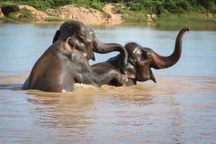 Nuoto dell'elefante Fotografia Stock Libera da Diritti