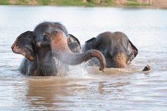 Nuoto dell'elefante Immagine Stock Libera da Diritti