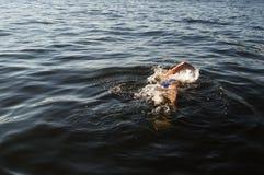 Nuoto dell'uomo Immagine Stock