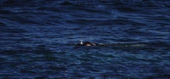 Nuoto dell'uomo nell'oceano video d archivio
