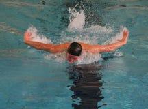 Nuoto della farfalla Immagine Stock