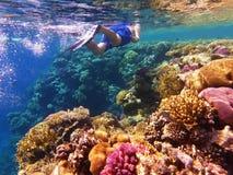 Nuoto dello snorkeler dell'uomo nell'acqua di mare vicino alla barriera corallina variopinta fotografie stock libere da diritti
