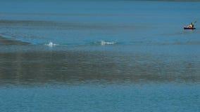 Nuoto di Triathletes in una palude in un triathlon di sport video d archivio