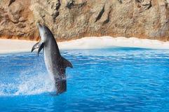 Nuoto indietro Fotografie Stock