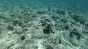 Nuoto sopra la barriera corallina del fondale marino archivi video