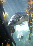 Nuoto sopra vicino Fotografie Stock